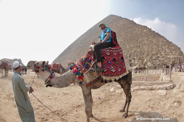 Unta Piramida Giza